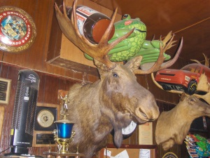 Stuffed Moose Head at the Tombstone Inn